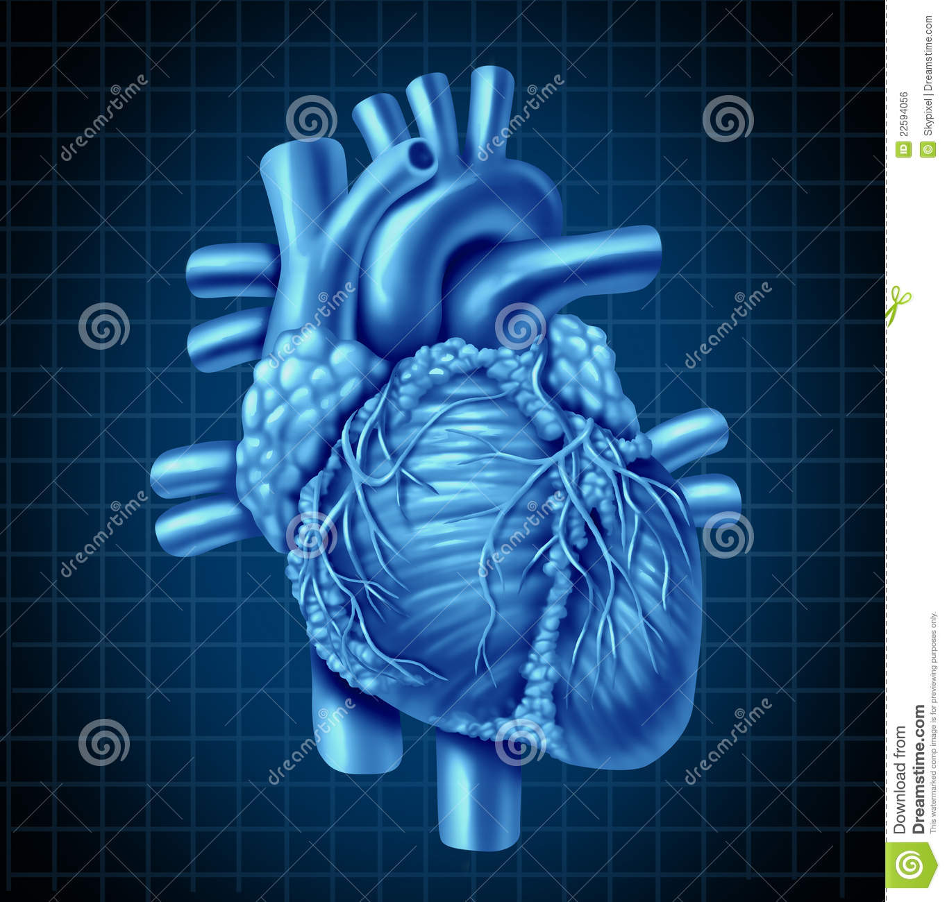Human heart anatomy from a healthy body on a blue and black graph ...