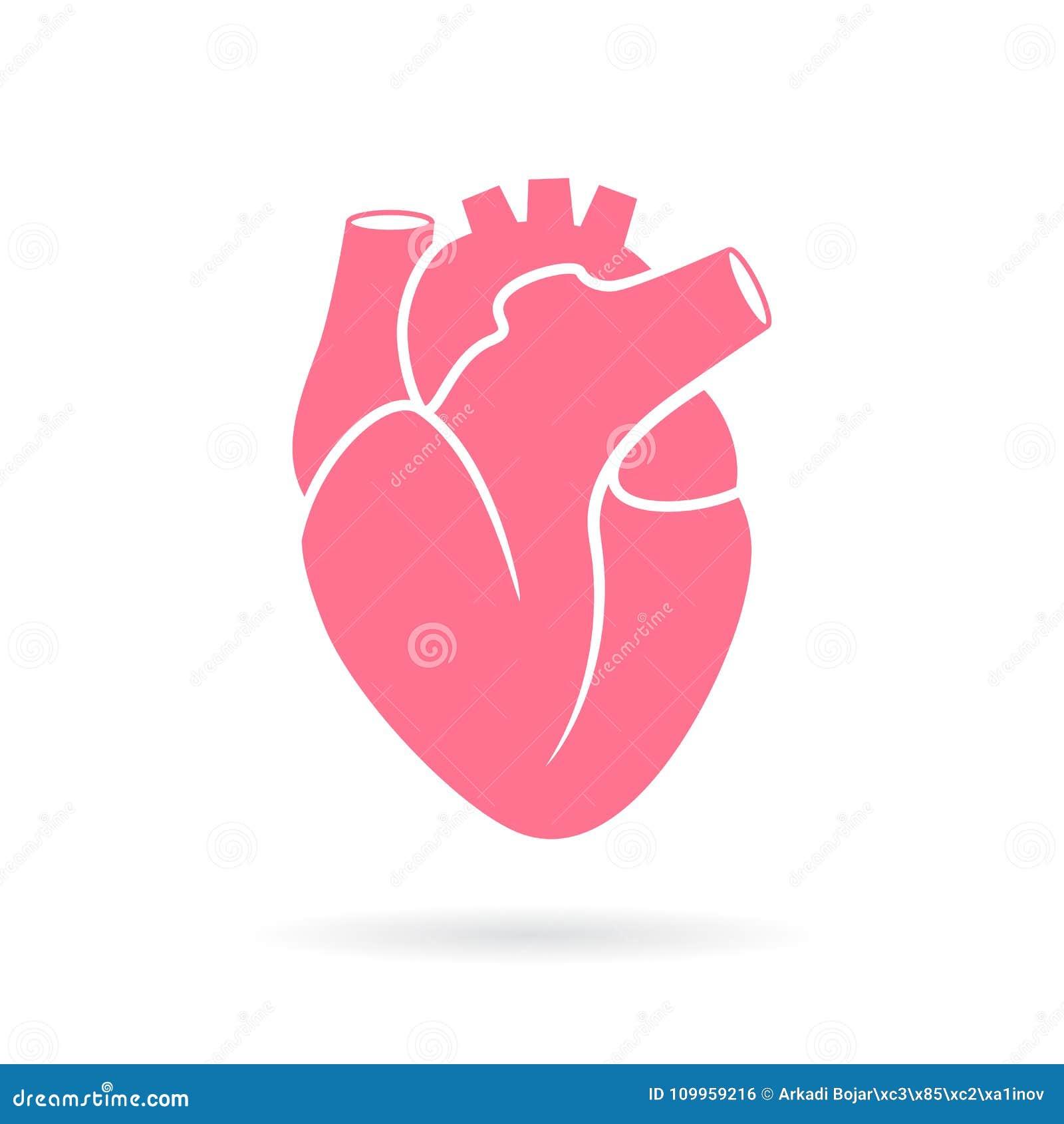 Heart anatomy vector icon stock vector. Illustration of hearts ...