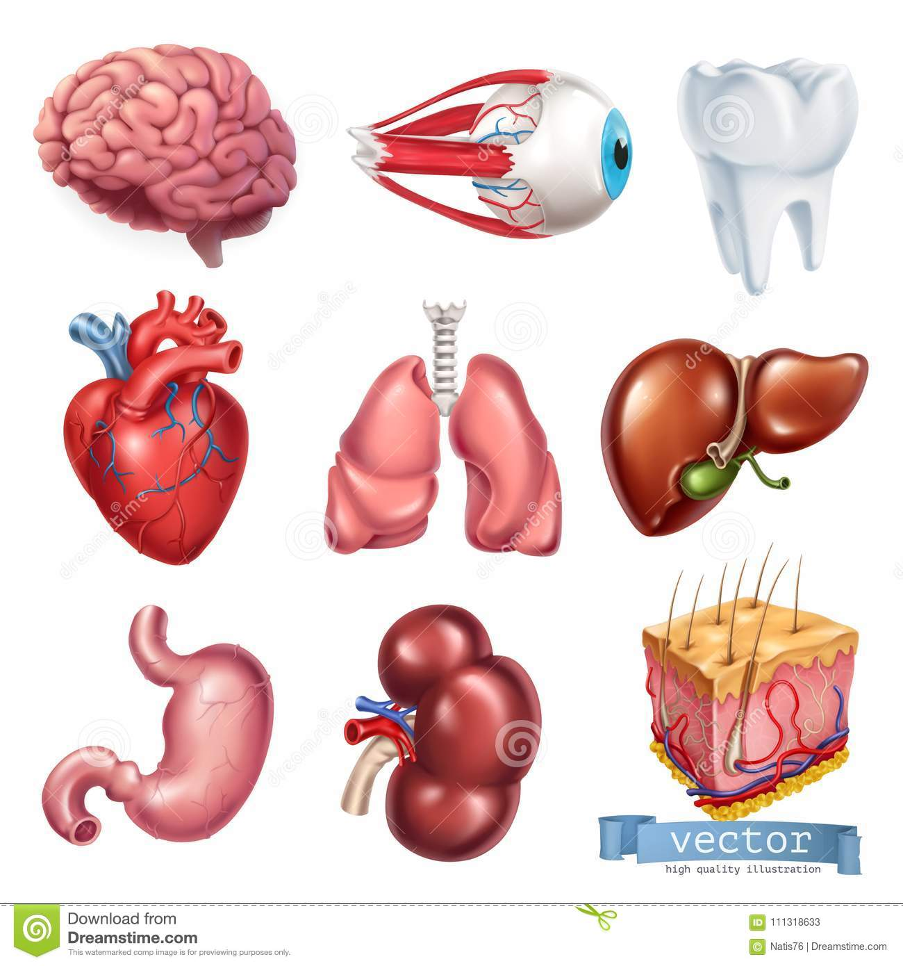 Human heart, brain, eye, tooth, lungs, liver, stomach, kidney, skin. 3d vector icon set