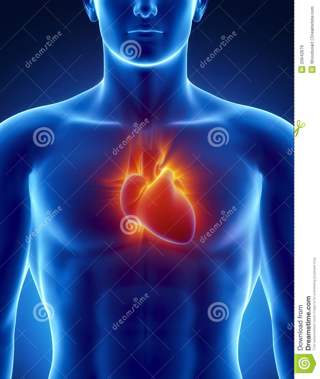 Human Heart In Detail With Glowing Rays Stock Illustration