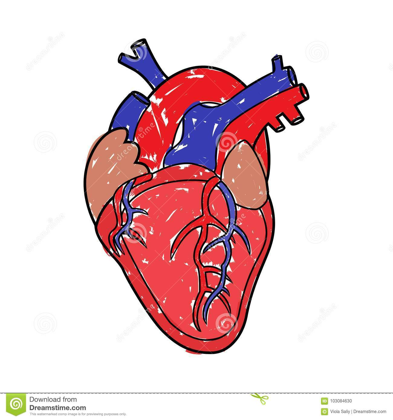 Heart Drawing human heart drawing stock vector. illustration of artistic - 103084630