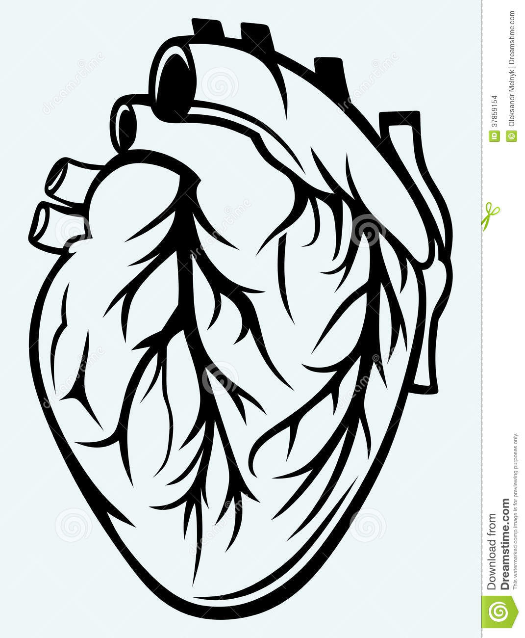 Heart Anatomy Coloring Page  exploringnatureorg