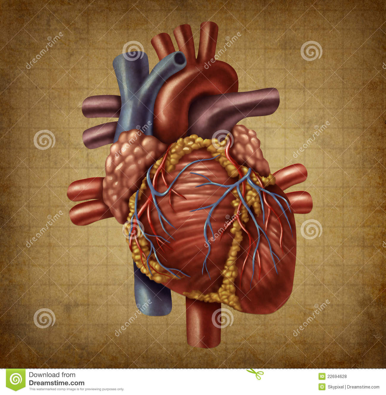 Human heart old grunge medical document stock illustration human heart old grunge medical document ccuart Choice Image