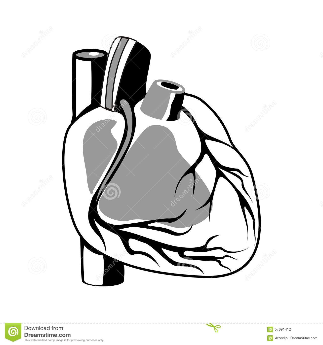 Human heart outline stock illustration illustration of scientific human heart outline stock illustration illustration of scientific 57691412 ccuart Gallery