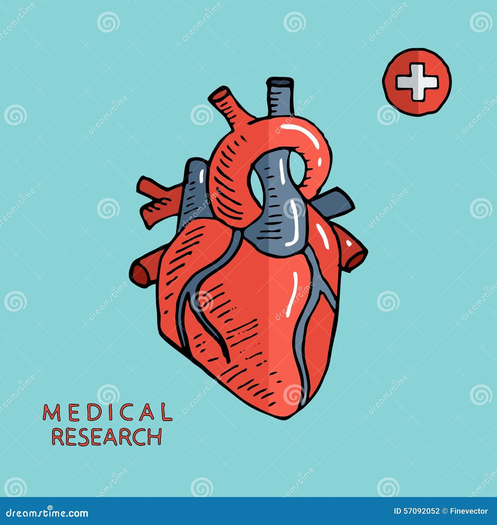 Human Heart  Sketch Hand Drawn Vector Illustration  Stock