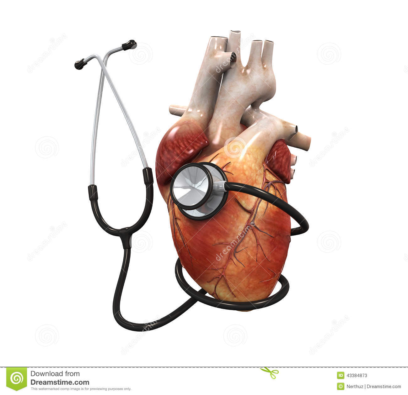 how to listen to heart sounds with a stethoscope