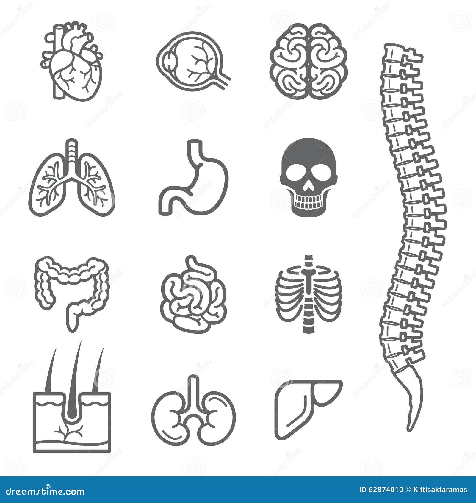 human internal organs detailed icons set  stock vector