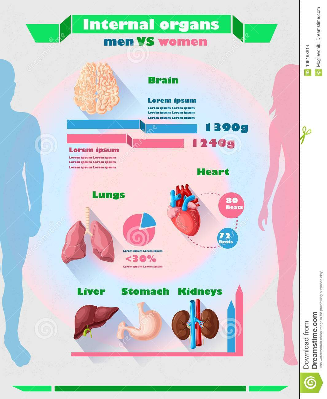 Human Internal Organs Infographic Template Stock Vector