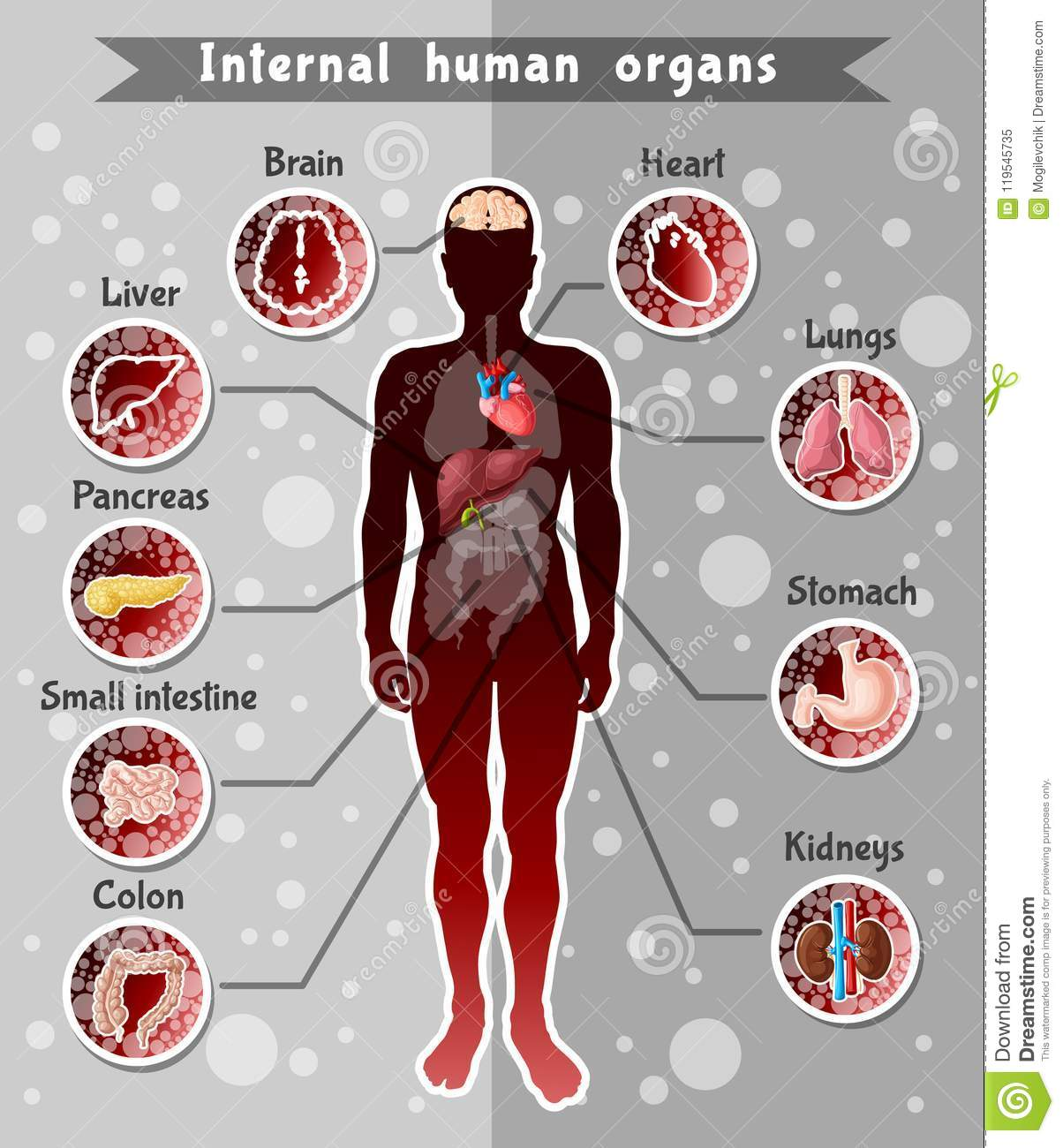Human Internal Organs Template Stock Vector Illustration Of Health