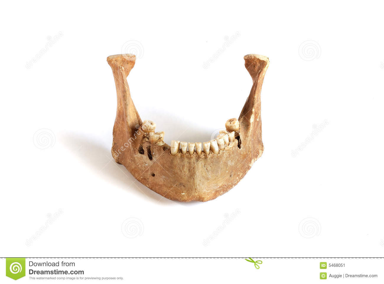 Gorilla skull stock image. Image of horror, face, anatomy - 36598513