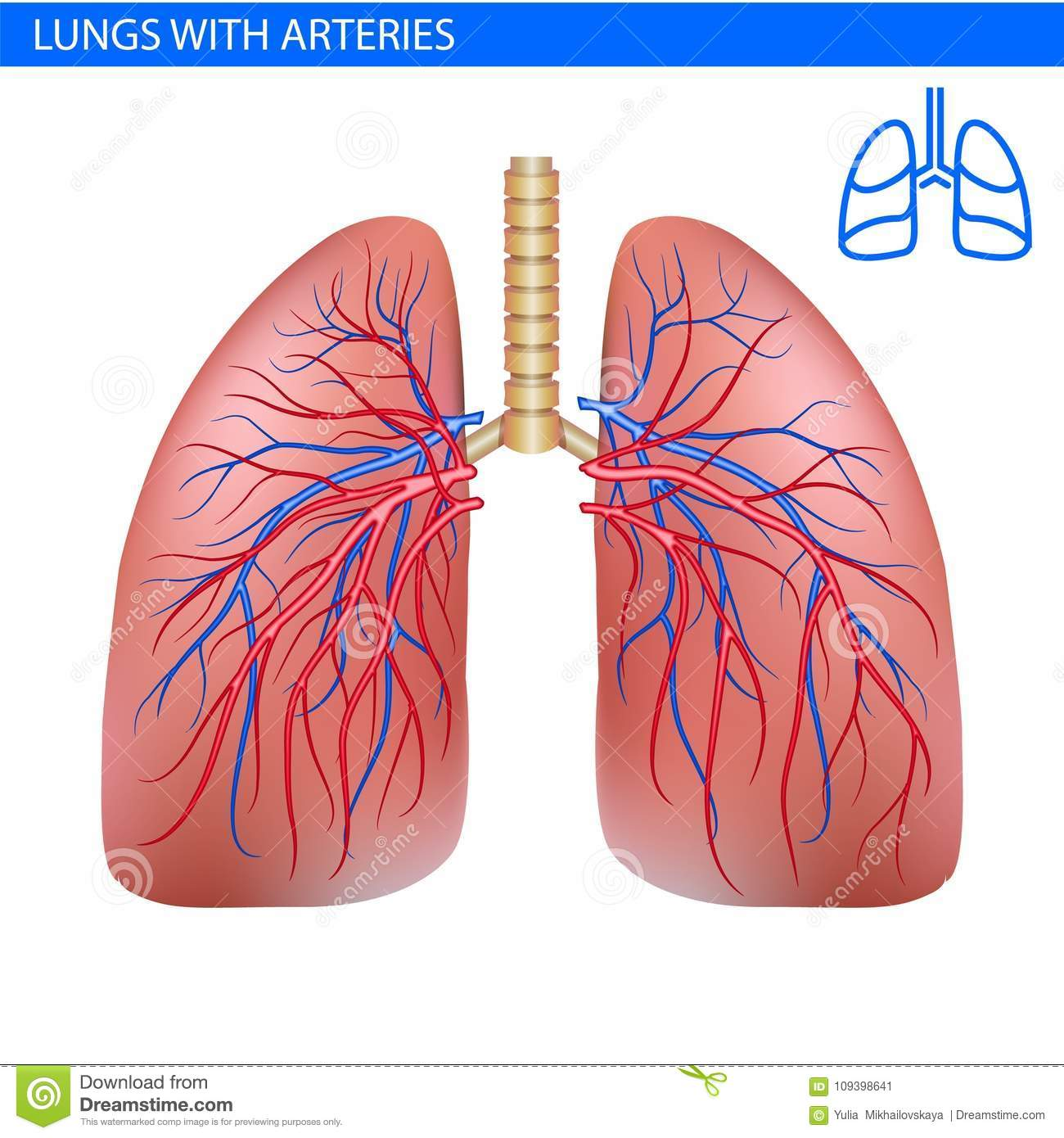 Realistic Lungs Diagram - Product Wiring Diagrams •