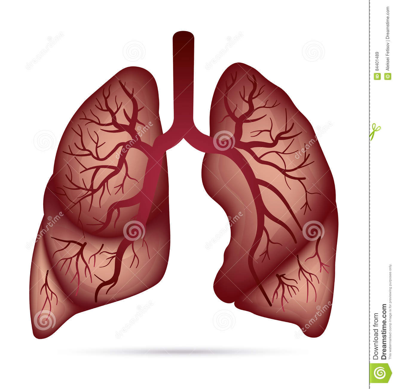 Tuberculosis In Human Lungs Cartoon Vector