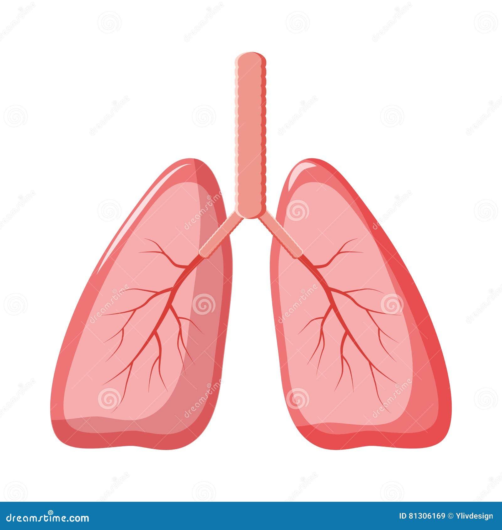 showing post & media for cartoon human lungs | www.cartoonsmix, Cephalic Vein