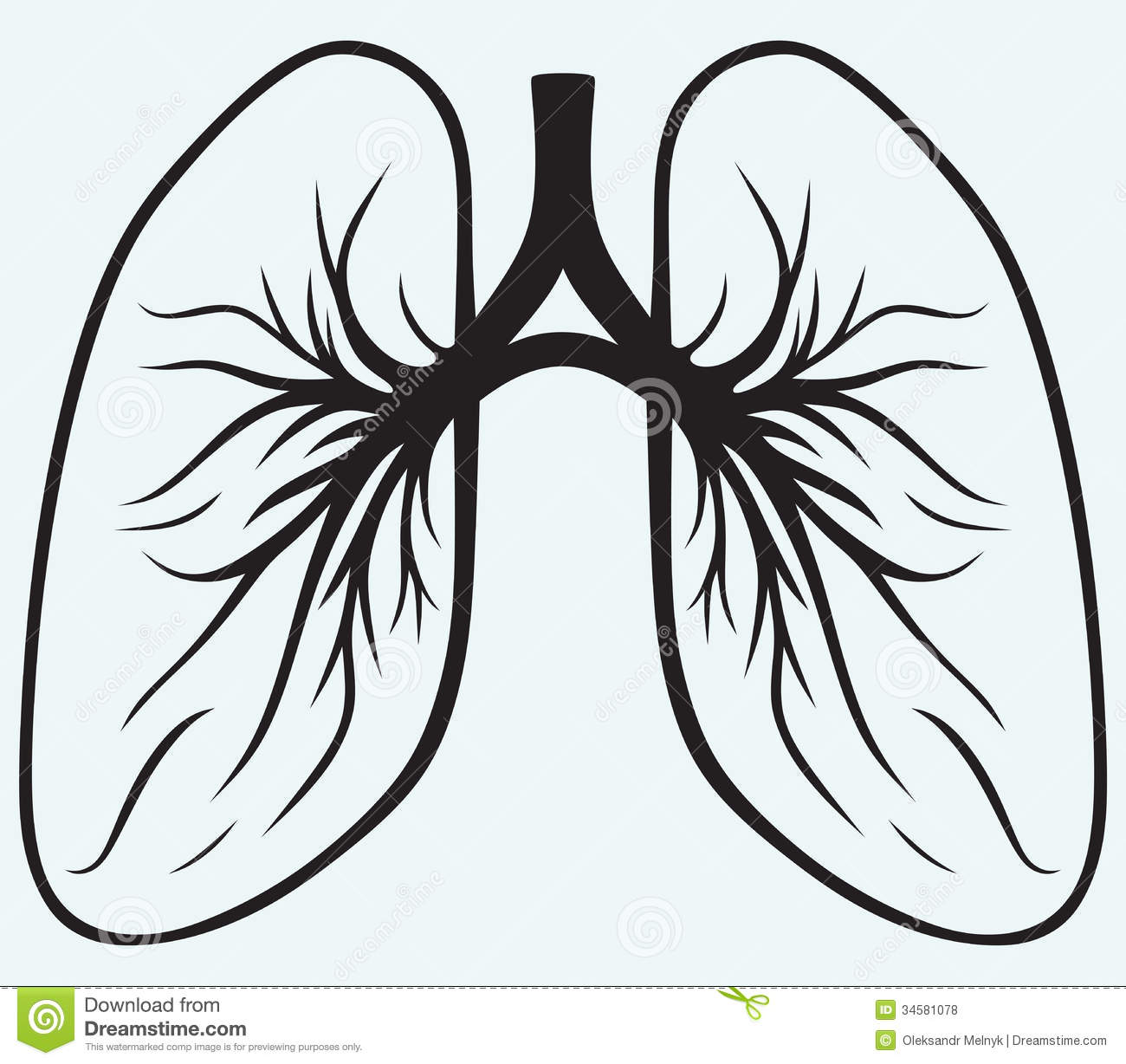 Human Lungs Royalty Free Stock Photos - Image: 34581078