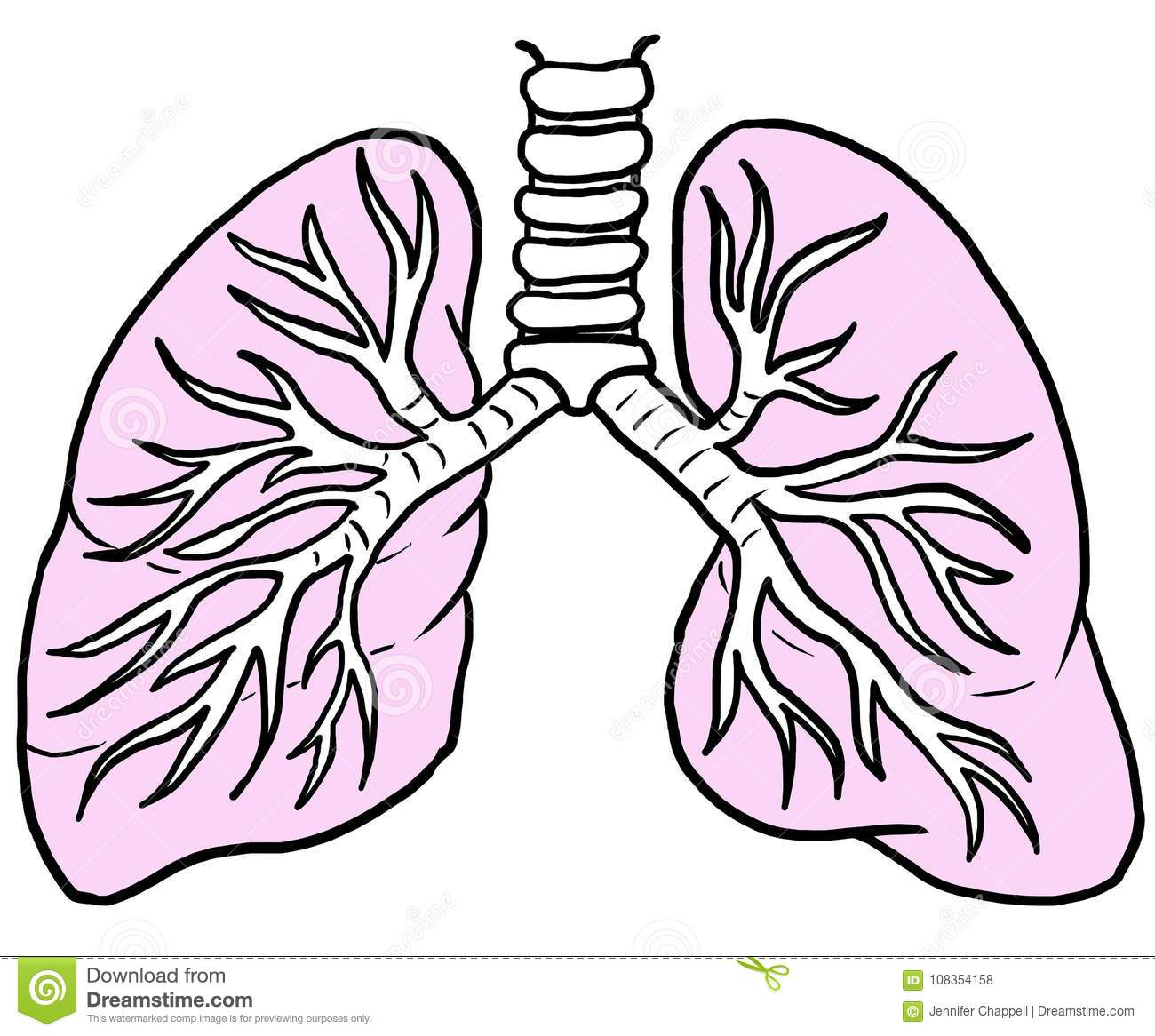 It's just a picture of Dynamic Human Lungs Drawing