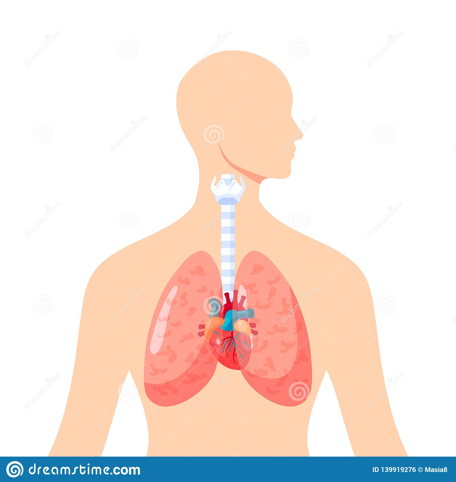 human lungs vector icon in flat style stock vector illustration of internal graphic 139919276 https www dreamstime com human lungs vector icon flat style inside female body illustration medical atlases articles educational textbooks etc image139919276