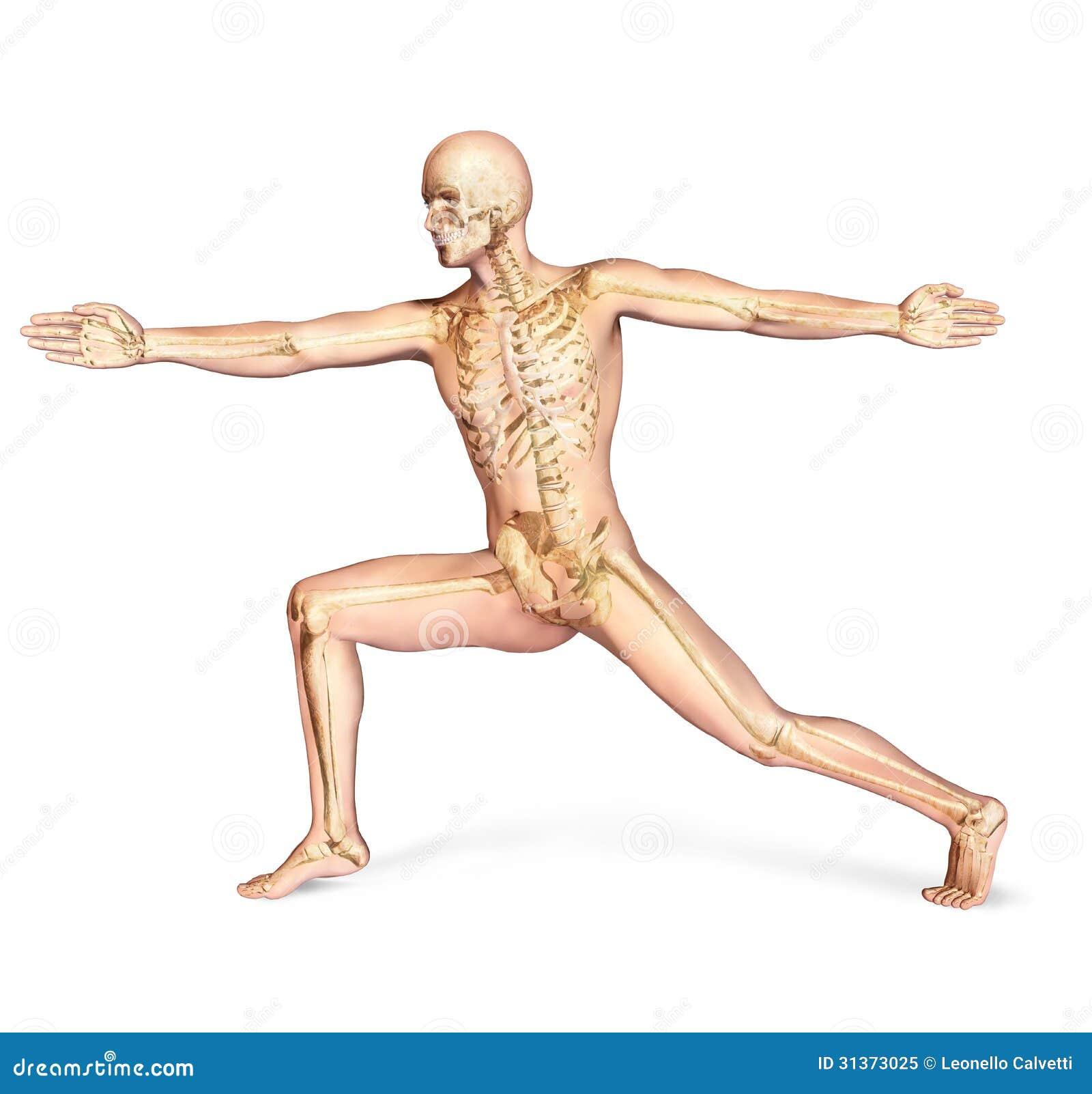 Skeletal Posture Pictures 27