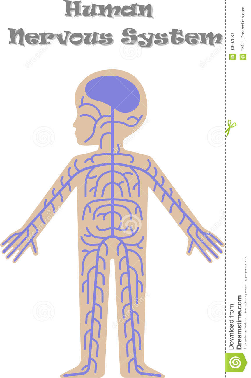 Human Nervous System For Kids Stock Vector Illustration Of Anatomy