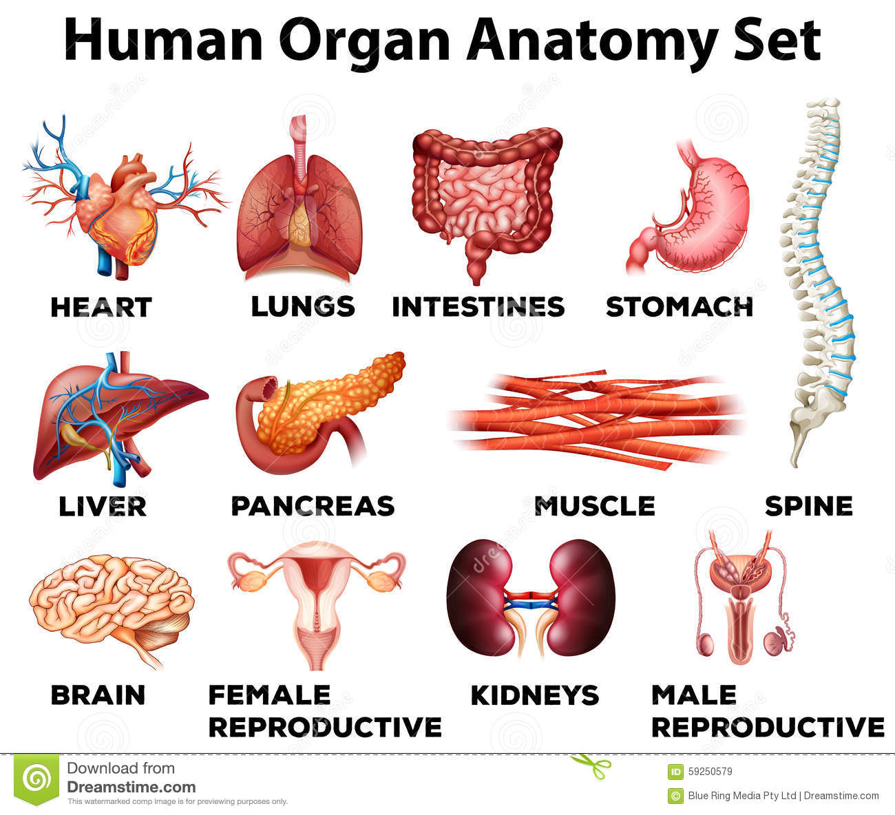 biology 20 article 1 human anatomy 1 the human body: an orientation the language of anatomy (pp 11–20) actually a separate branch of biology, but it falls under the anatomy umbrella when we.