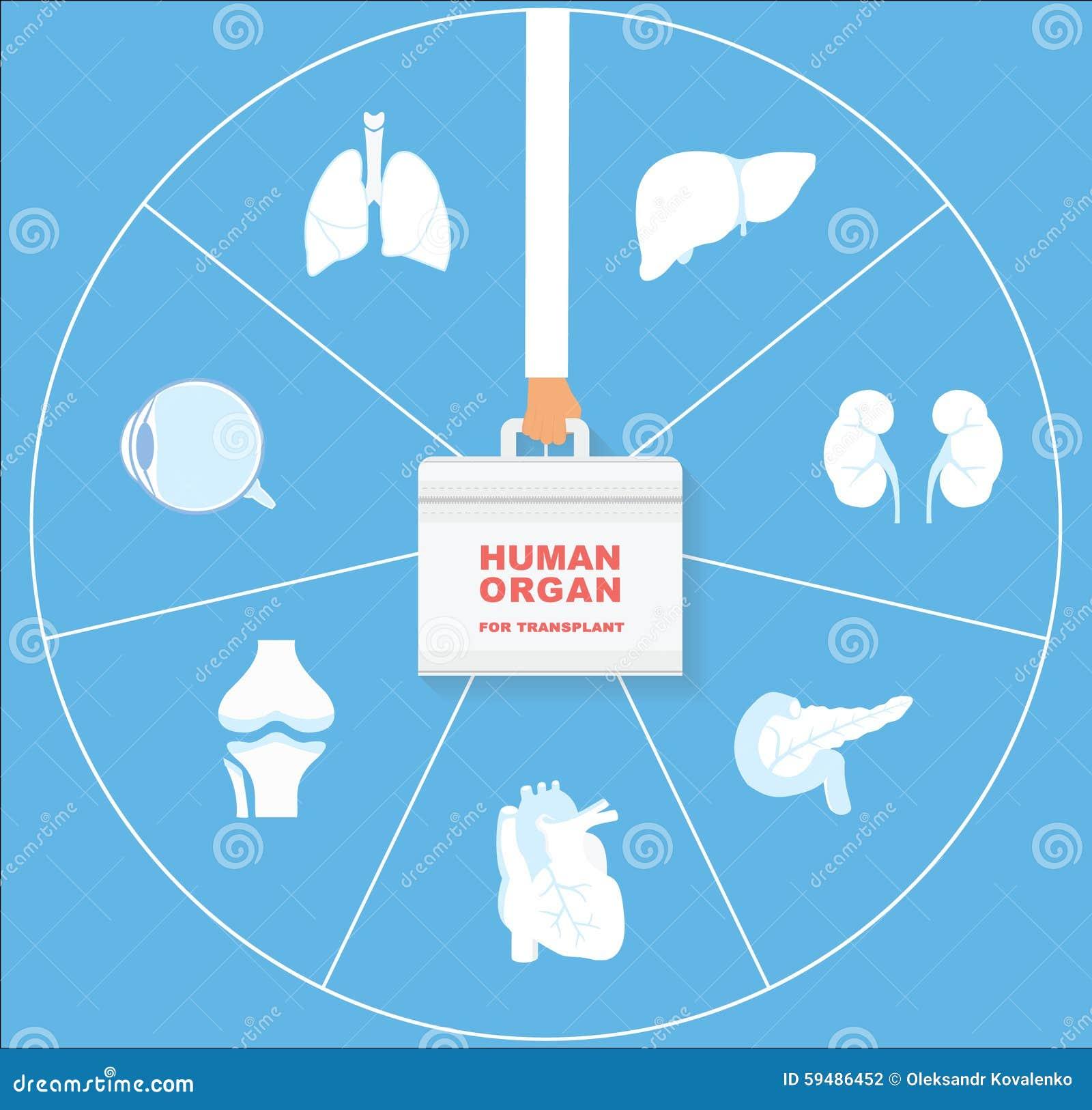 Heart anatomy stock vector Illustration of circulation