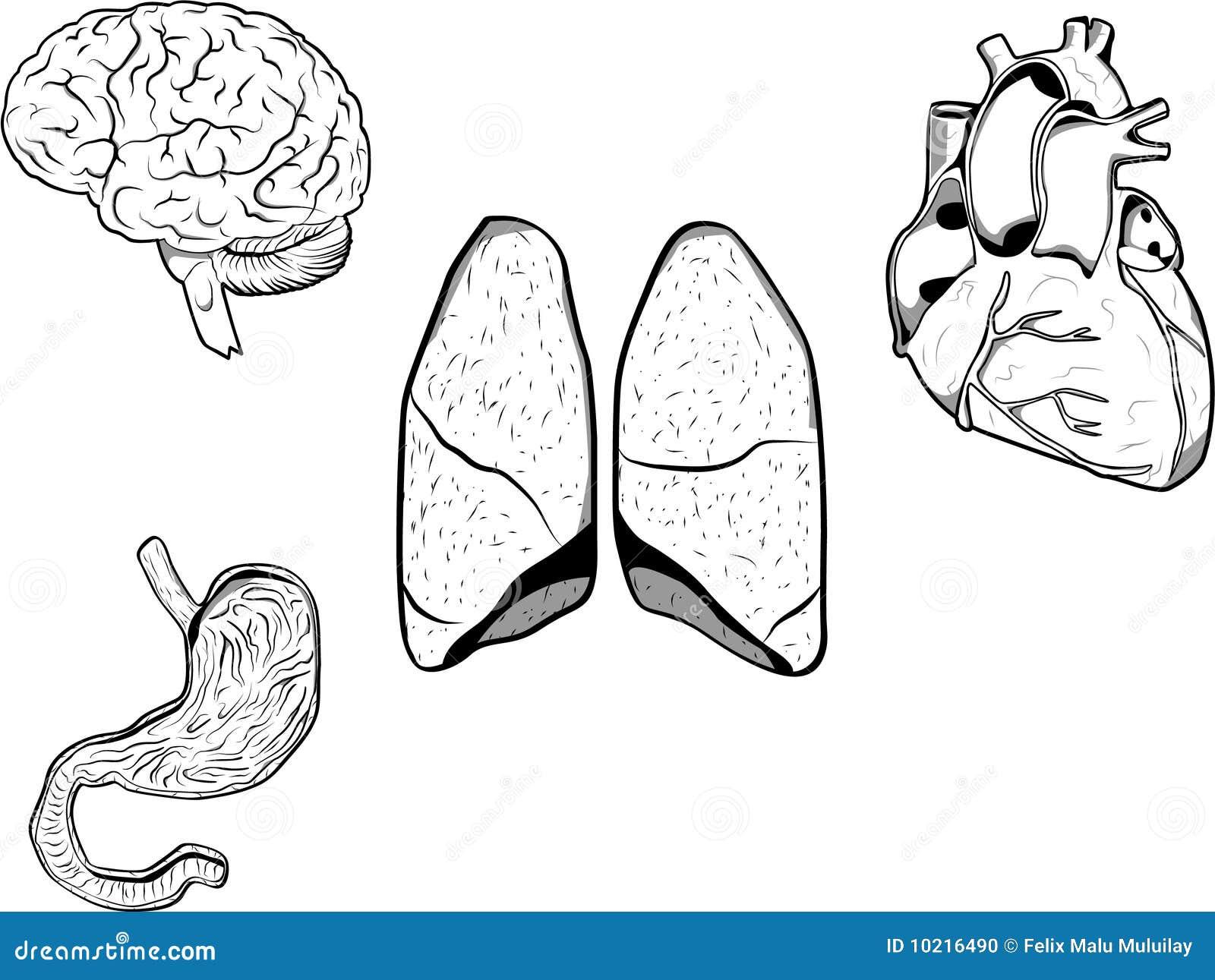 human organs stock photo image 10216490 horseshoe magnet clipart black and white Horseshoe with Eyes Magnet