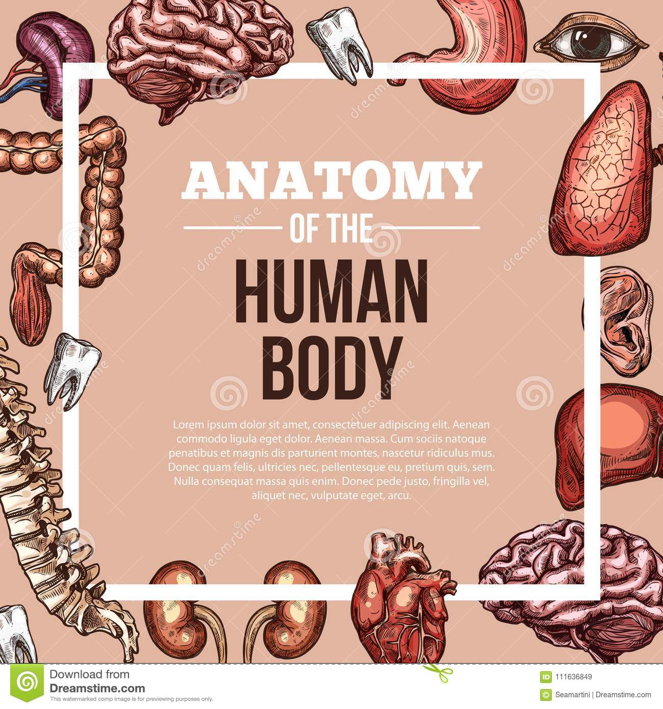 Human Organs Vector Sketch Body Anatomy Poster Stock Vector ...