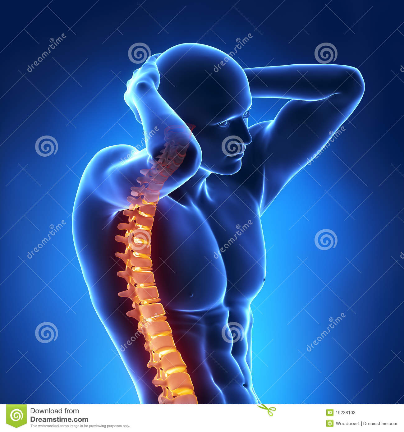 Human X Ray Spine Front View Stock Illustration Illustration Of