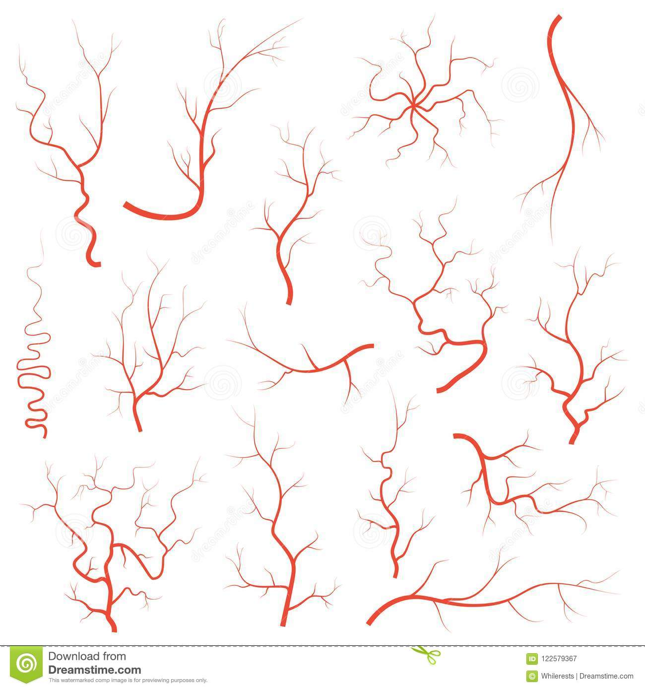 Human Red Eye Veins Set Anatomy Blood Vessel Arteries Illustration