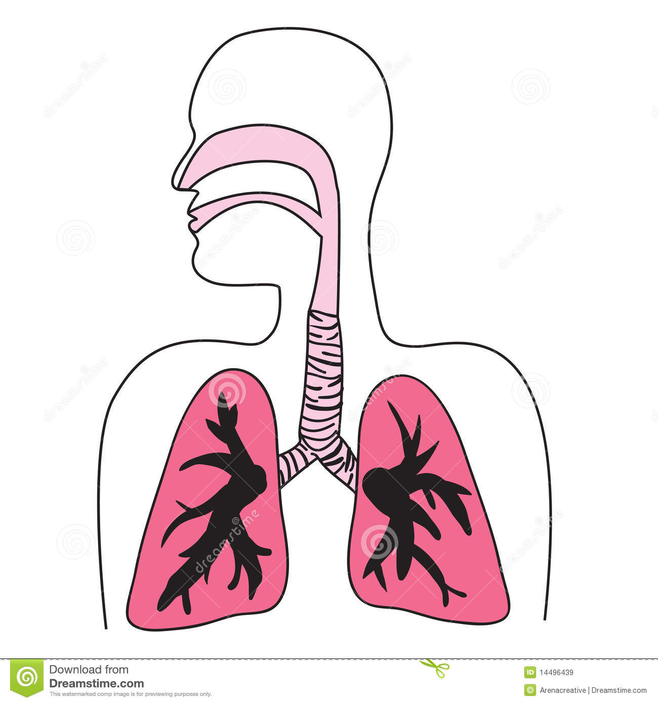 Human respiratory system diagram stock illustration illustration human respiratory system diagram ccuart Image collections