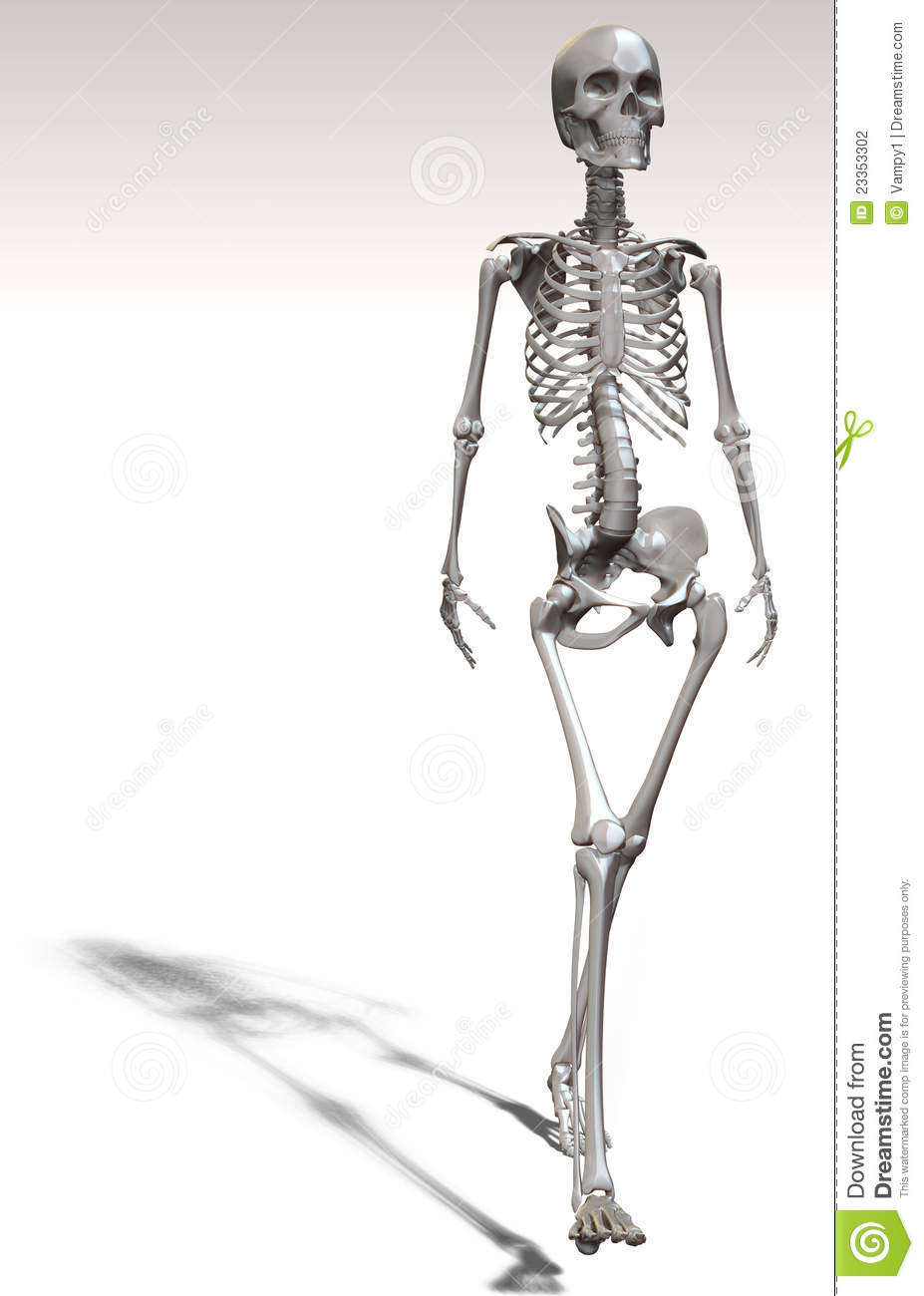 Human Skeleton And Bones Stock Illustration Illustration Of