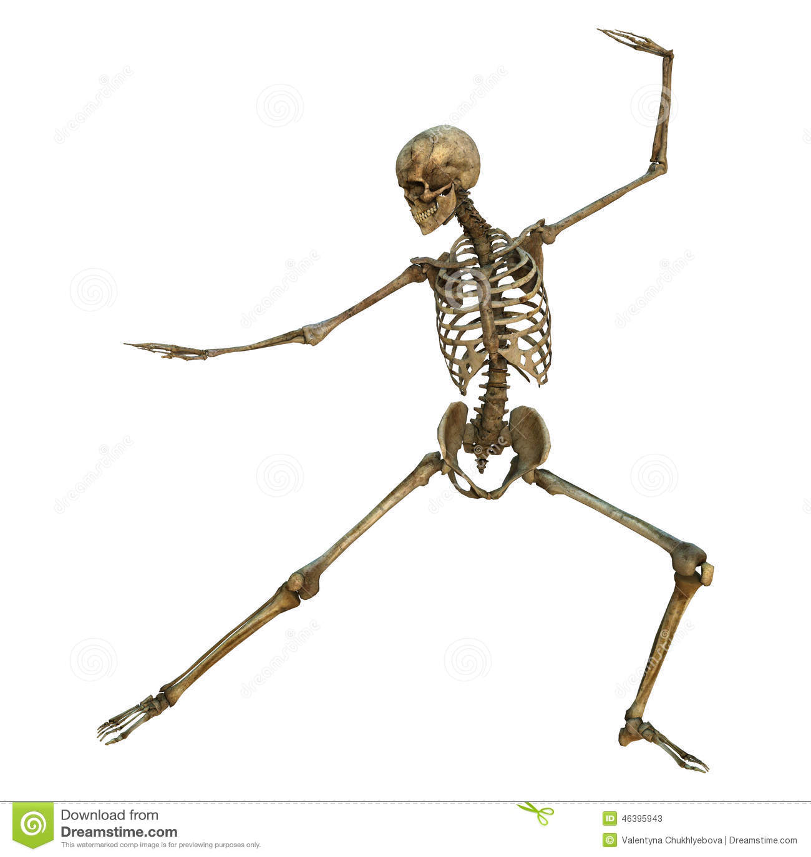 human skeleton stock illustration - image: 46395943, Skeleton