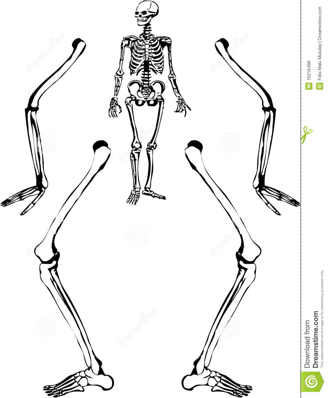 Human Skeleton Drawing Stock Vector Illustration Of Dead 10216496