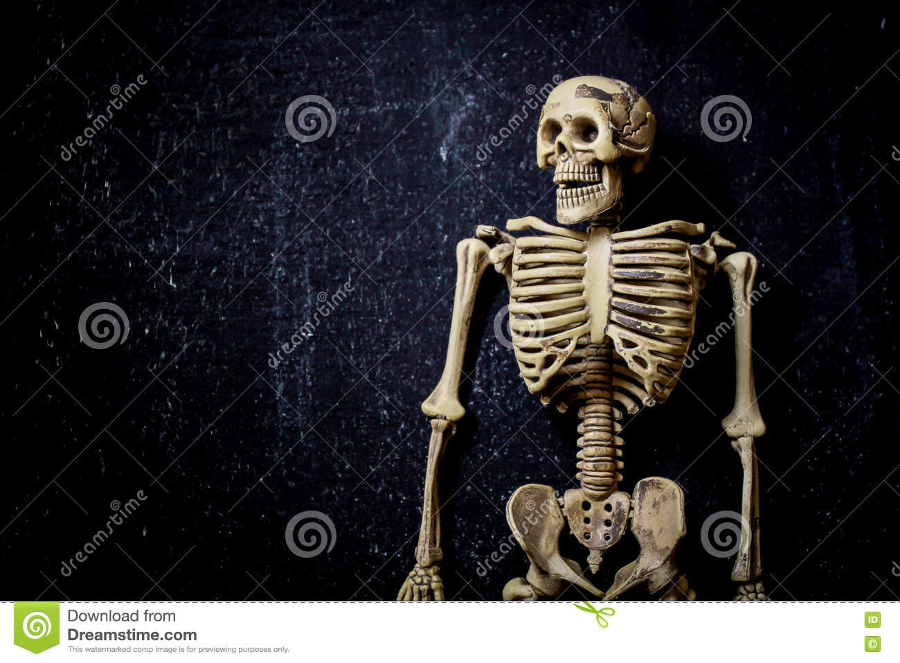Human Skeleton Stock Image Image Of Abstract Frighten 78822581