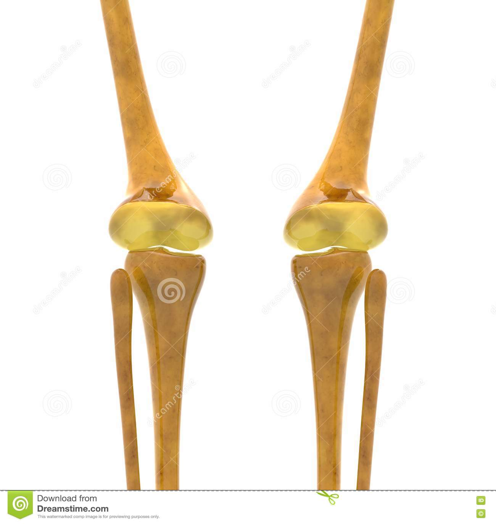 human skeleton knee joints stock illustration - image: 65665841, Skeleton