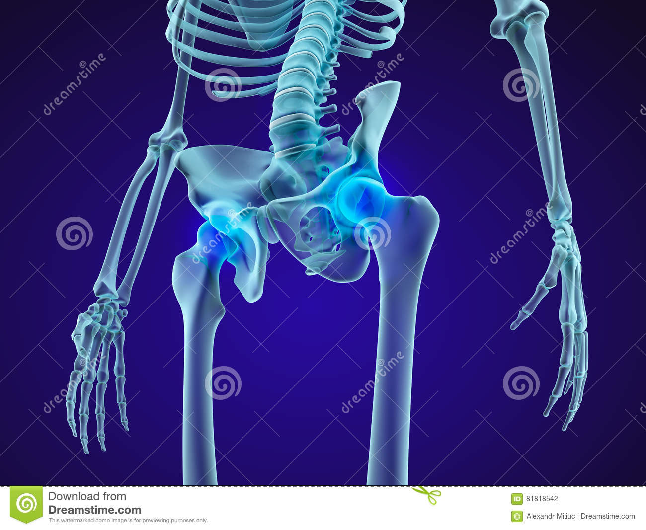 human skeleton: pelvis and sacrum  xray view  medically accurate 3d  illustration