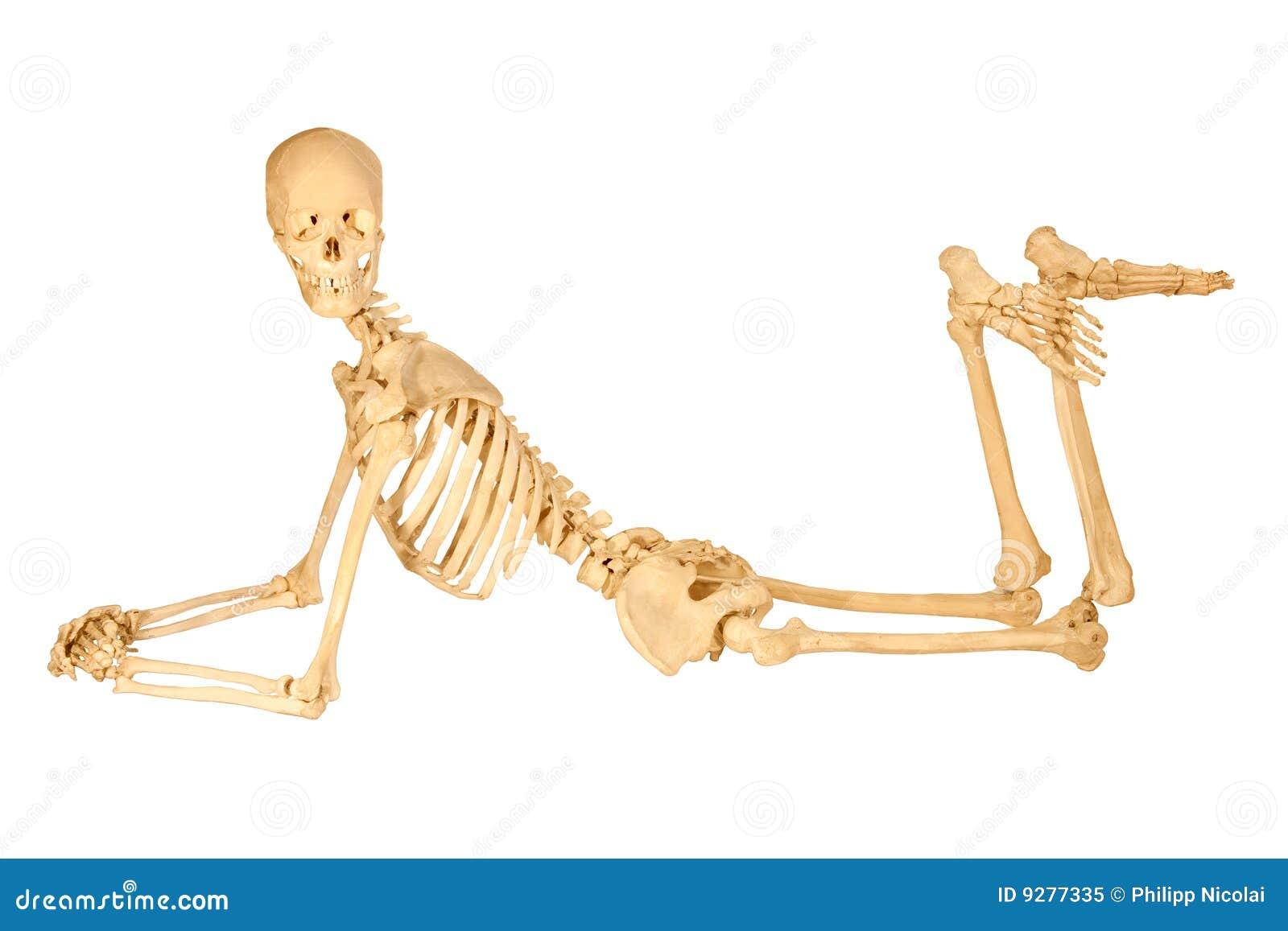 Human Skeleton Posing Royalty Free Stock Photo - Image: 9277335
