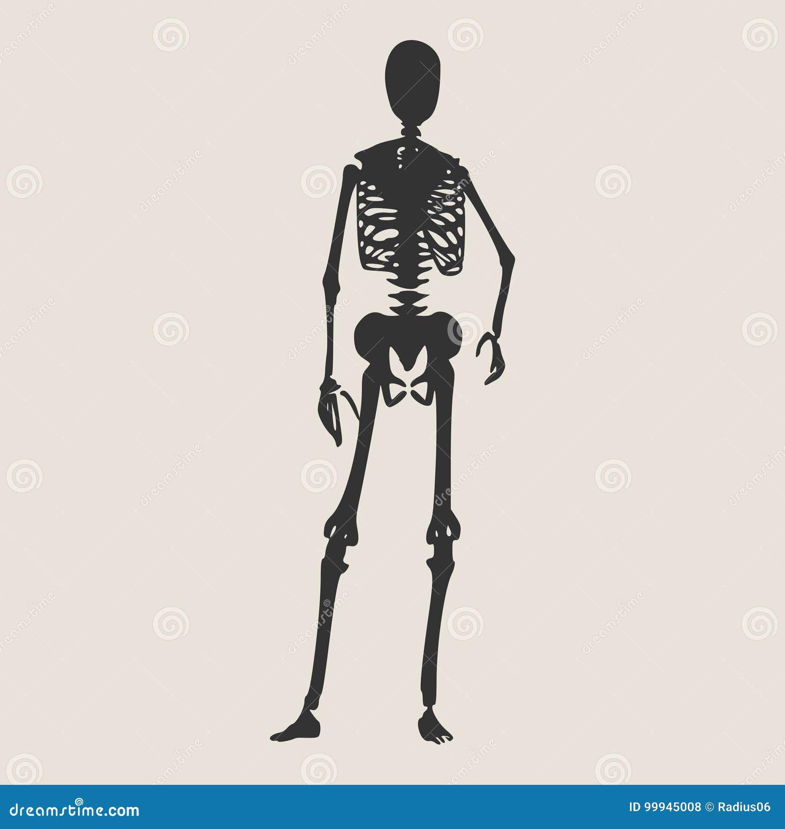 Halloween human skeleton stock vector  Illustration of