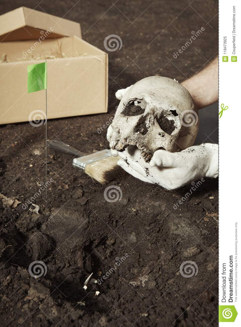 Human skeleton - skull - found and packed by archaeologist on location