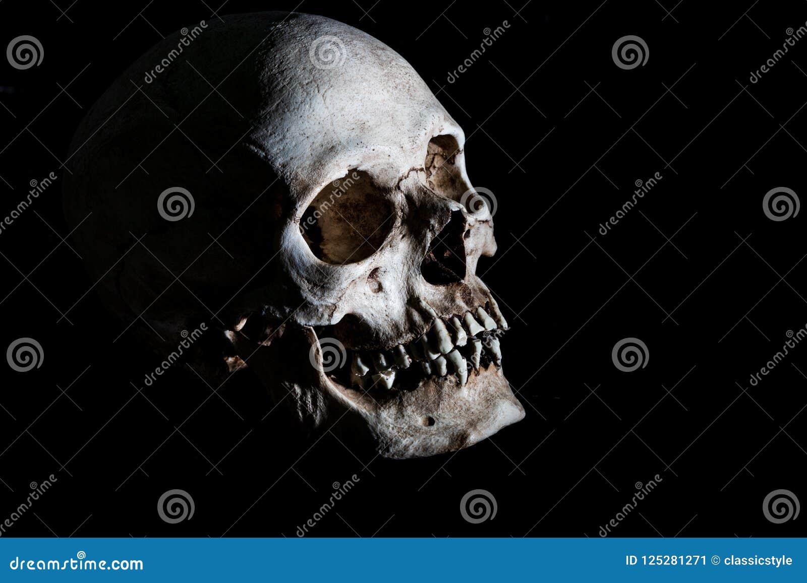 Human Skeleton Skull Head Isolated On Black Stock Image Image Of