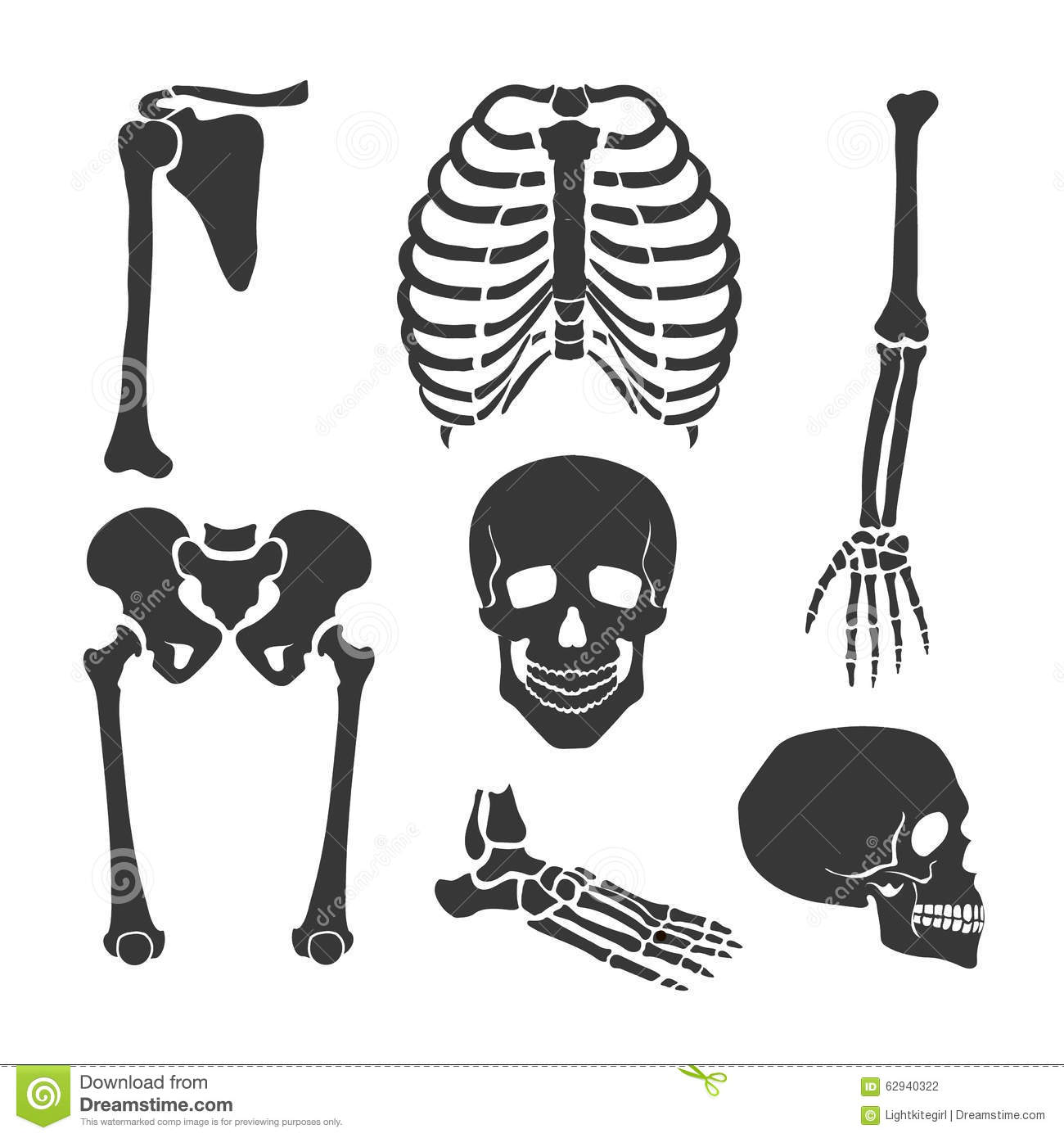 human skeleton. vector black illustration set stock vector - image, Skeleton