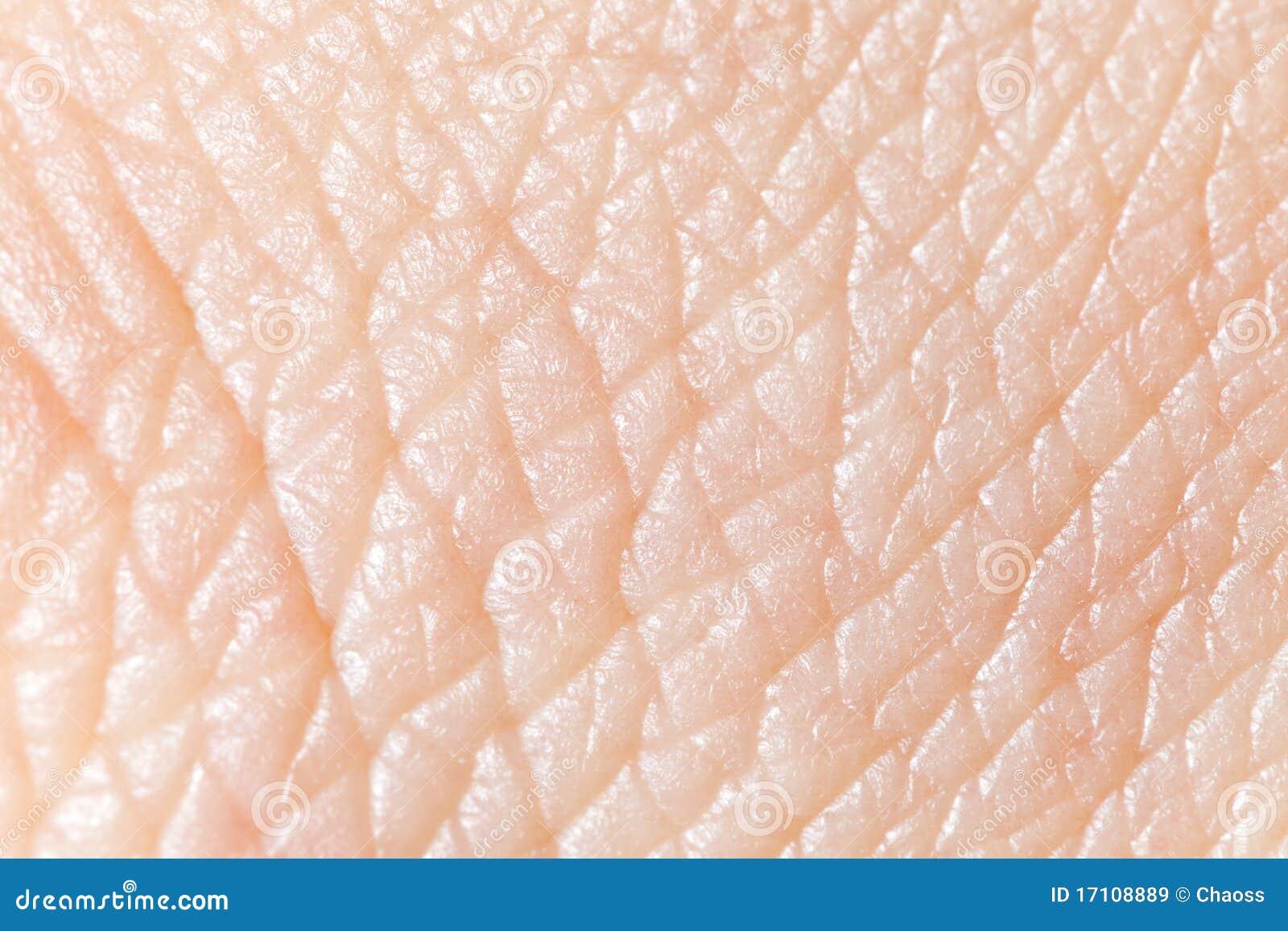 human skin royalty free stock images image 17108889 human skin royalty free stock images image 17108889