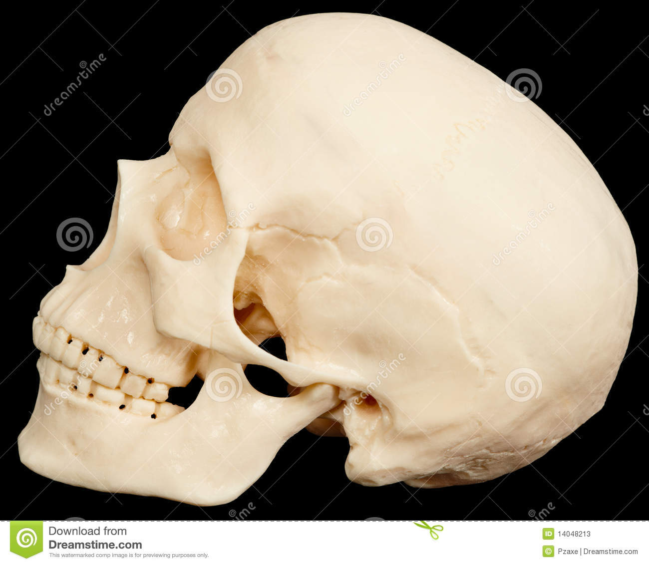 Terrible Names Human Skull On Black Background In Profile Stock Photos