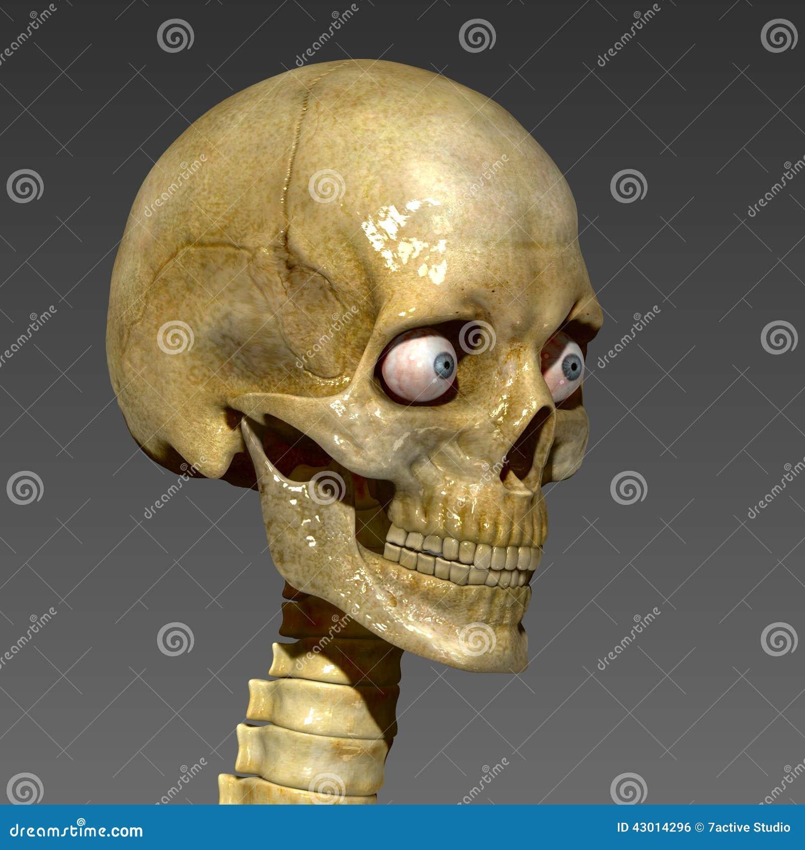 human skull stock photo - image: 43014296, Skeleton