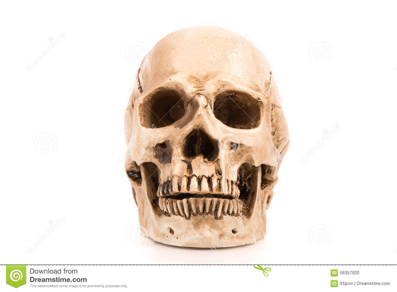 Human Skull Stock Photo Image Of Dark Horror Appearance 56357920