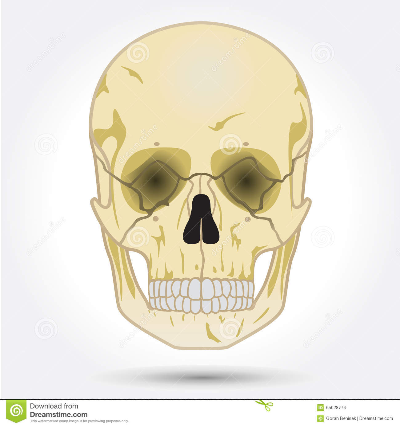 Human Skull Front View Stock Vector Illustration Of Gothic 65028776