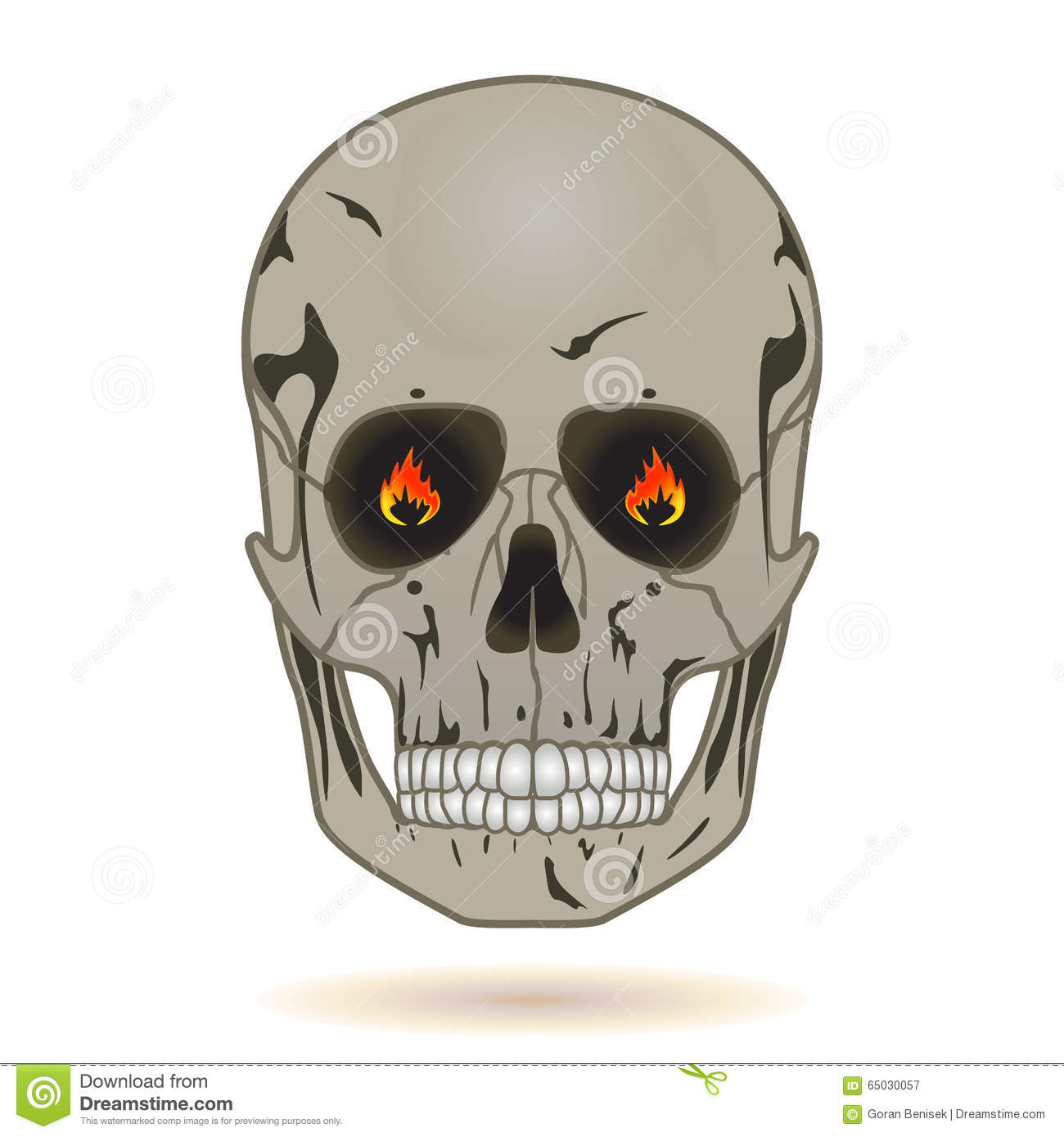 Human Skull Front View Stock Vector Illustration Of Horror 65030057