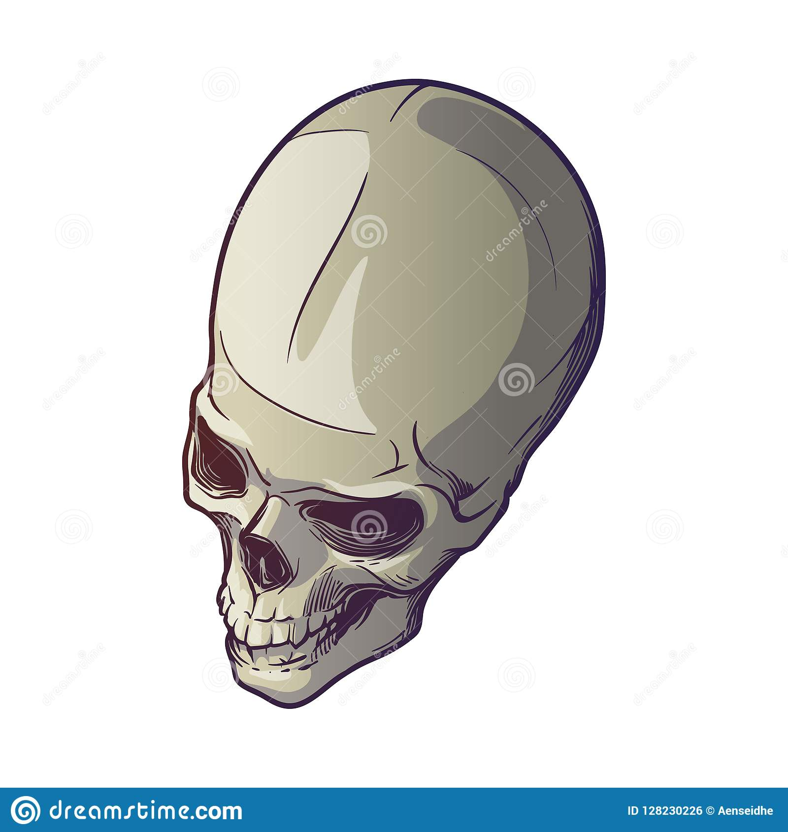 4c72433ab58 Human Skull hand drawing. Top angle. Linear drawing painted in 3 shades