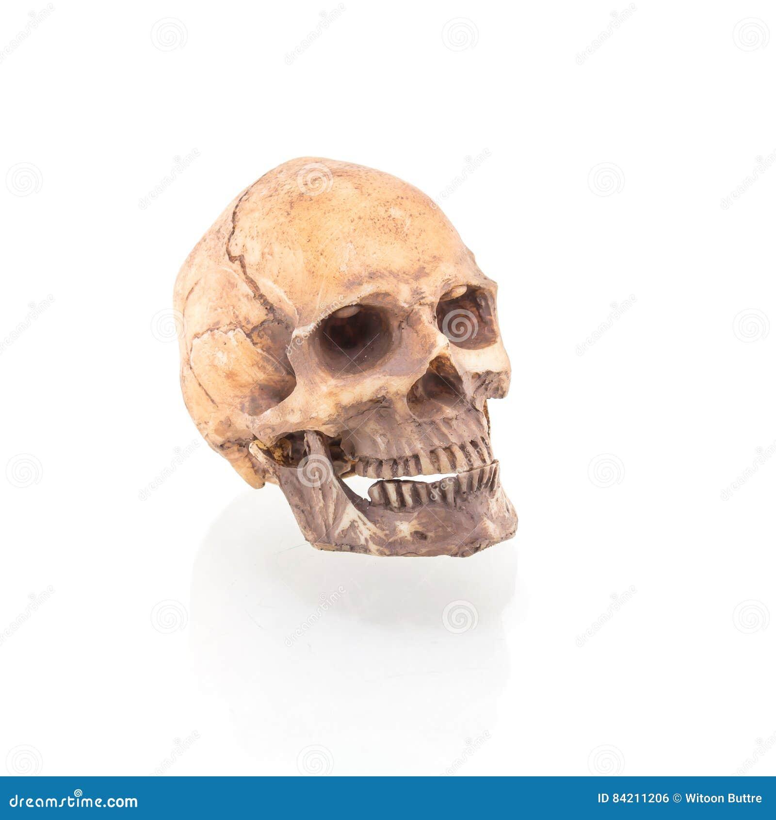 Human skull on isolated