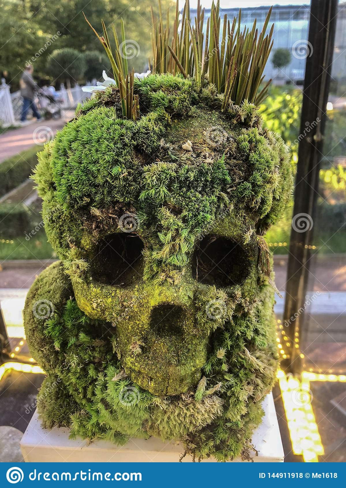 Human skull made from plants.
