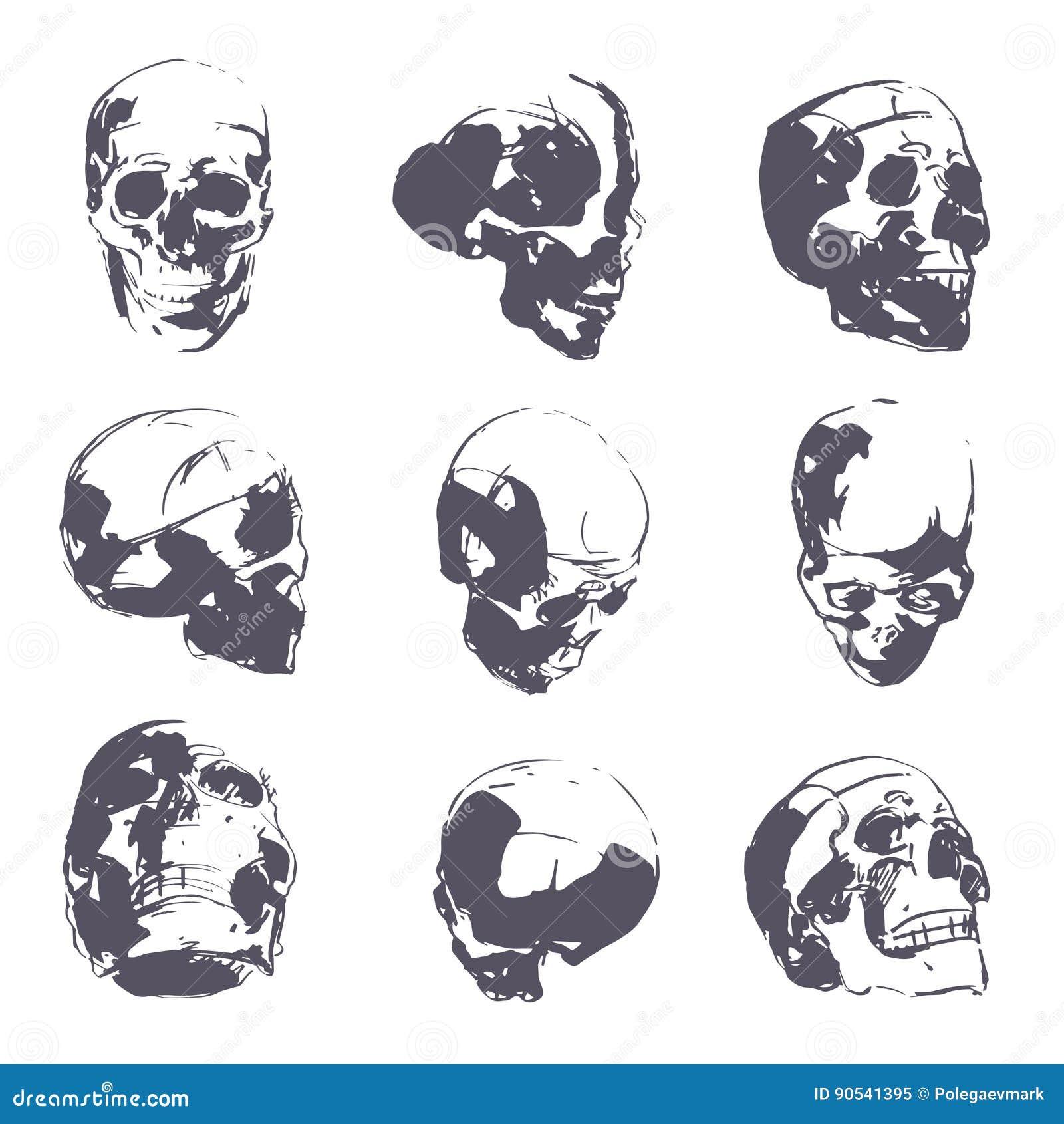 human skull in rough sketch man head anatomy hand drawn vector